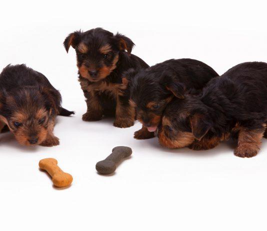 puppy dierenvoeding