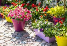 diverse kleuren bloembakken